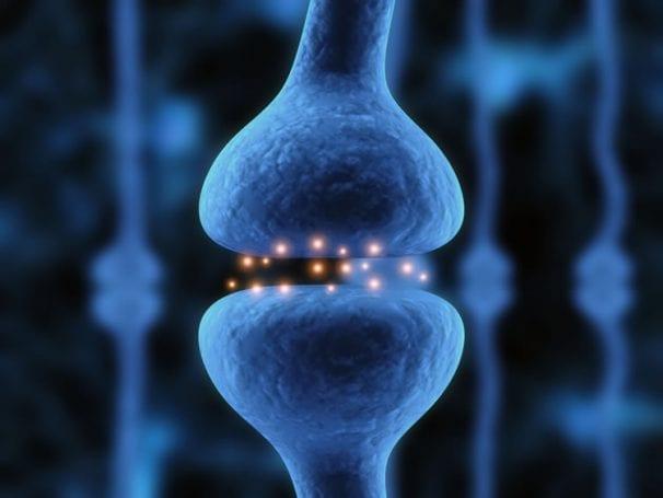Sinir uçları arasında iletiyi sağlayan nörotransmitterler.