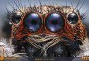 Salticidae: Portre