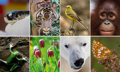 biodiversity-100-007