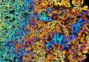 Sıvı Kristaller: Maddenin 5. Hali Mi?