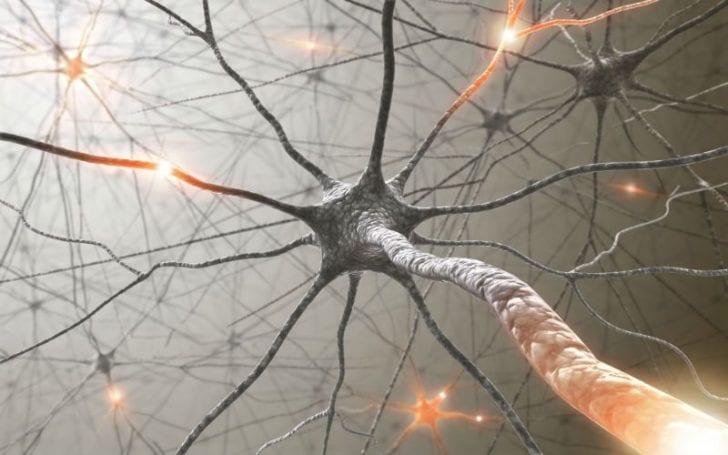 Beyin hücrelerimiz (nöronlar) bilgi iletimini gerçekleştirebilmek adına nöronlar arası sinapsları, diğer bir deyişle beynimizin bilgi iletiminden sorumlu bağlantı noktalarını kullanırlar.
