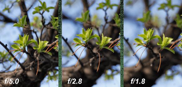 F değerinin değişmesi ile yani diyaframın kısılması veya açılması ile görüntüde gerçekleşen değişim.