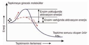 enzim_aktivasyon_enerjisi