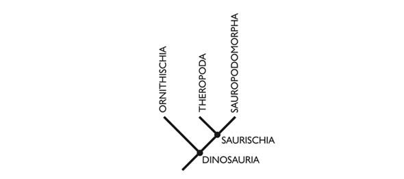 Dinozorların eski filogenetik ağacı.