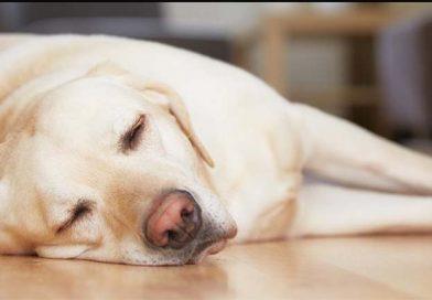 Uykunuzu Yeterince Alsanız Bile Sürekli Yorgun Mu Hissediyorsunuz?