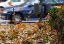 Dökülen Yapraklar Enerji Depolayan Araçlara Dönüştürülebilir!