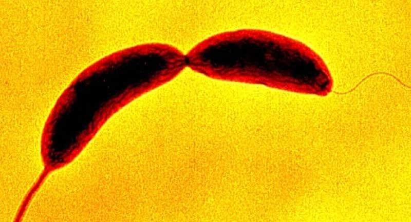 Bilim İnsanları Bakterilerin Dokunma Duyusuna Sahip Olduğunu Keşfettiler!