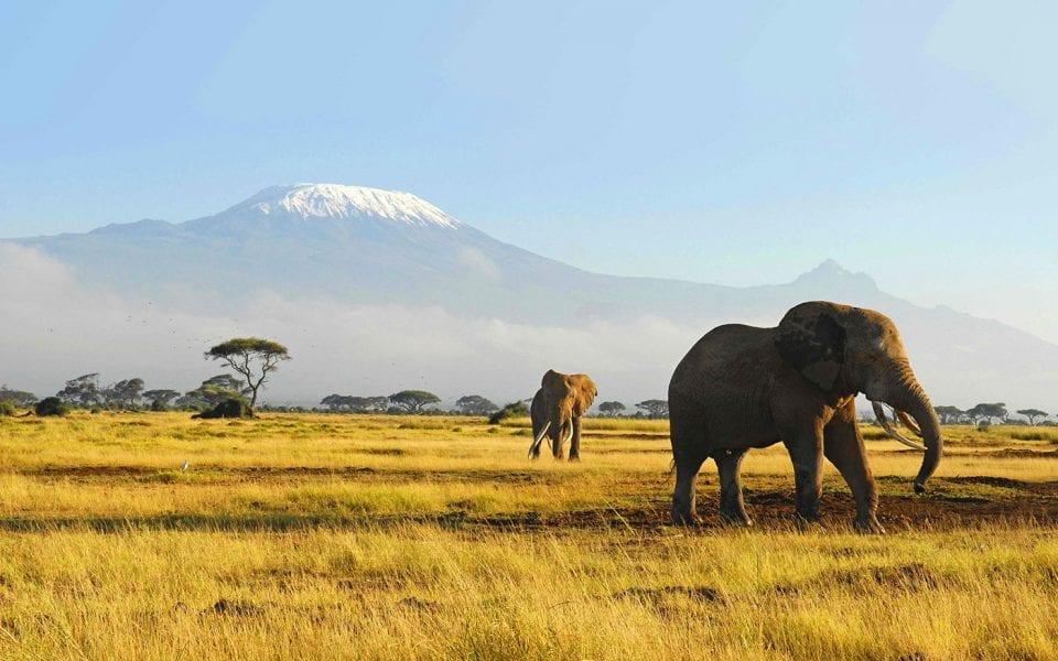 African Elephants WP