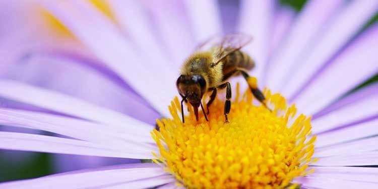 Photo of Arılar Çiçeklerin Elektrik Alanını Nasıl Algılar?