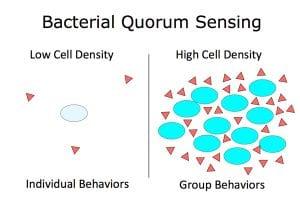 Figür 2: Quorum Sensing
