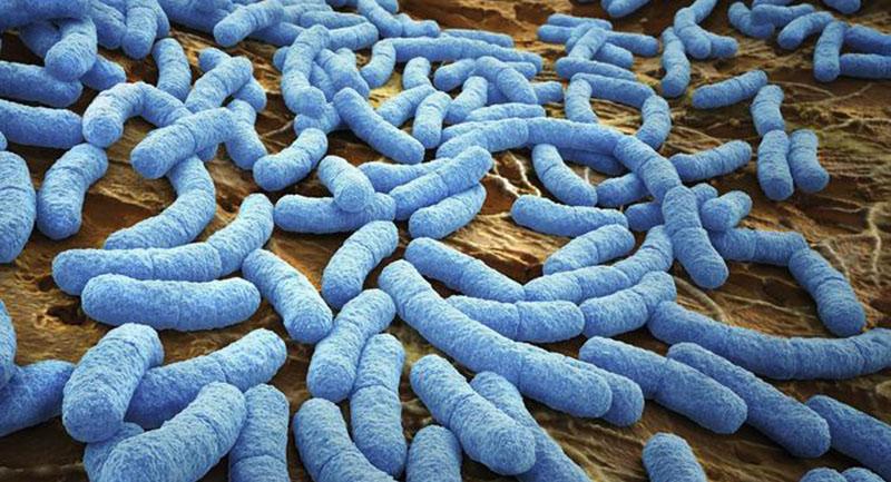 Photo of Tıbbi Mikrobiyoloji: Bakterilerin Sınıflandırılması