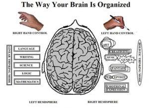 Beyin yanallaşması. Uzun zamandır insan beyninin kabaca birbirine benzeyen iki yarıdan oluştuğunu biliyoruz. Sağ lob, görsel hafızadan sorumluyken sol lob dil ve motor becerilerini kontrol ediyor.Beynin bir tarafındaki bazı bilişsel süreçlerin egemenliğinin, diğer bir deyişle beynin yanallaşmasının insanlarda ayırt edici bir özellik olduğunu, ve birinin bilişsel yeteneğinin diğerinden daha gelişmiş olduğu ise pek bilinmez.