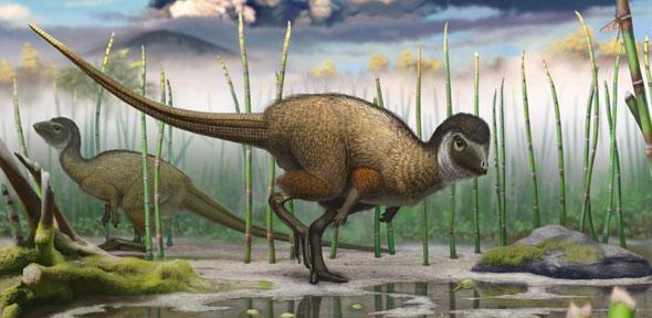 Kulindadromeus; yeni Ornithoscelida grubunun bir parçası olan ve canlı kuşlarla ortak bir soy ataya sahip olan küçük iki ayaklı dinozor. Telif: Pascal Godefroid