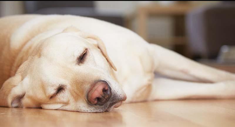 Photo of Uykunuzu Yeterince Alsanız Bile Sürekli Yorgun Mu Hissediyorsunuz?