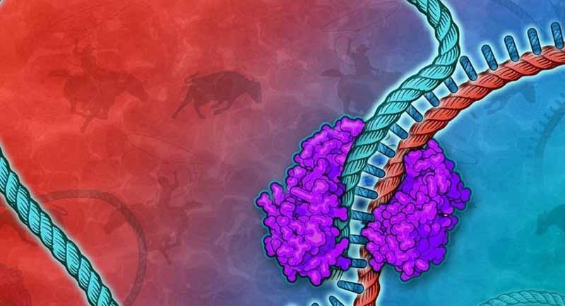 Photo of Bilim İnsanları Binlerce Geni Tek Reaksiyon ile Klonlamayı Başardı!