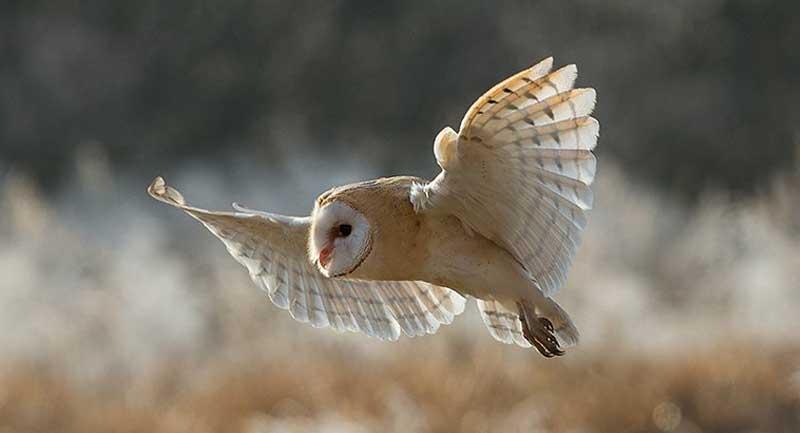 Photo of Baykuş Kanatları Bize Daha Sessiz Türbinler ve Uçaklar Yapmayı Öğretebilir!