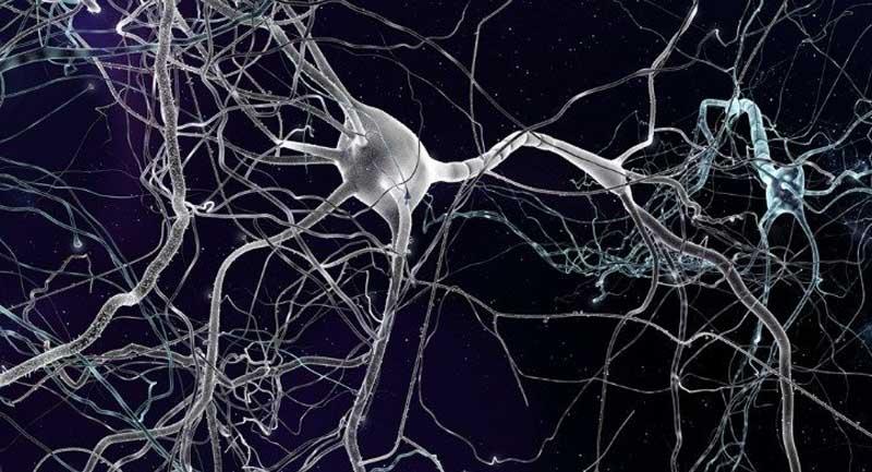 beyin hücreleri İnsan Beyninde Yeni Hücre Türleri Keşfedildi!