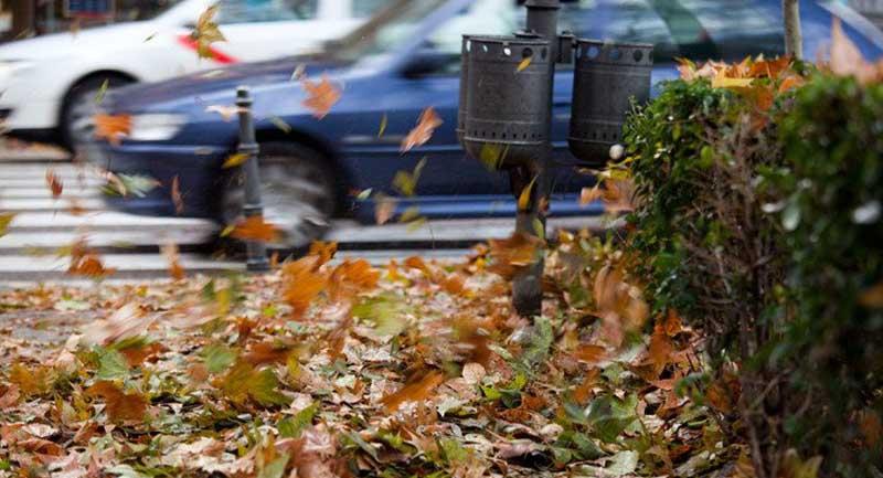 Photo of Dökülen Yapraklar Enerji Depolayan Araçlara Dönüştürülebilir!