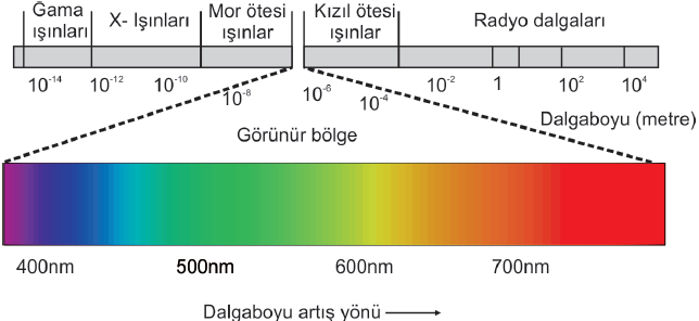 spektrum insangozu