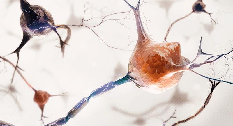 Photo of Beynin Büyümesi Yetişkinlikte Sonlanmıyor!