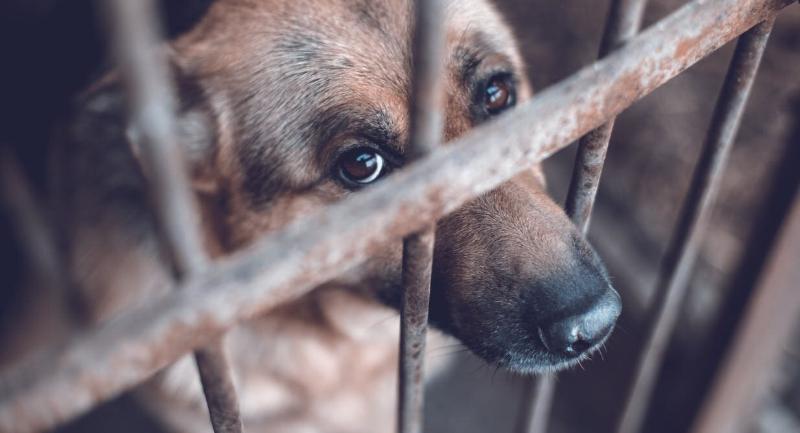 Photo of Hayvanlara Eziyet ve Antisosyal Davranış Arasındaki İlişki