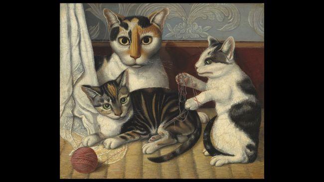 kedi 7 Kedilerin patileri neden beyazdır?