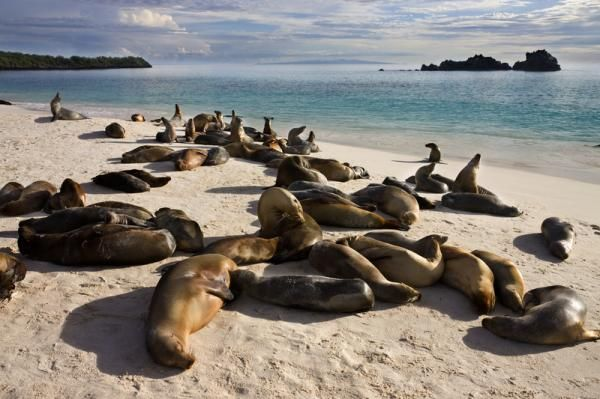 Photo of Galápagos Adaları: Evrimin Laboratuvarı