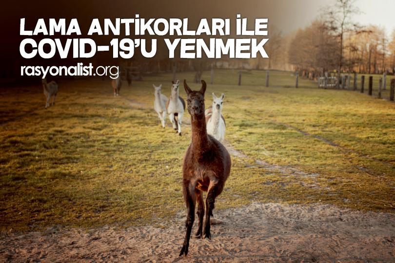 Photo of Lama Antikorları ve Covid-19