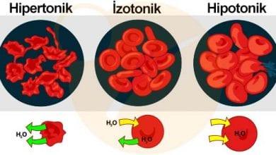 hipotonik izotonik hipertonik ortam S Hipotonik Ortam Nedir?