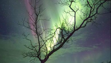 Aurora Ağacı
